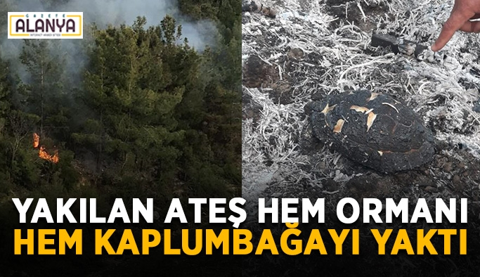Yakılan ateş hem ormanı hem kaplumbağayı yaktı