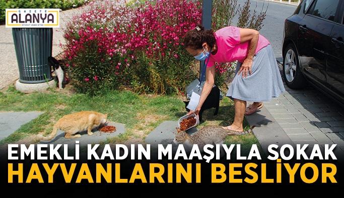 Emekli kadın maaşıyla sokak hayvanlarını besliyor