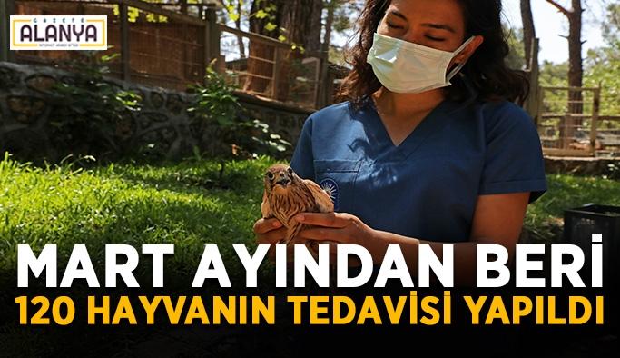 Mart ayından beri 120 hayvanın tedavisi yapıldı
