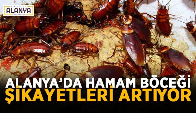Alanya'da hamam böceği şikayetleri artıyor