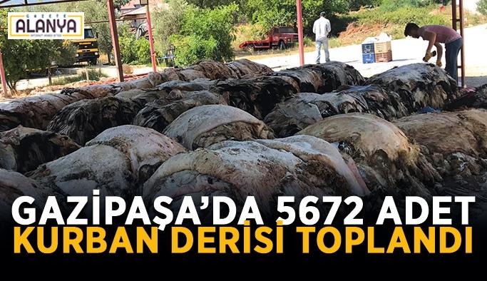 Gazipaşa'da 5672 adet kurban derisi toplandı