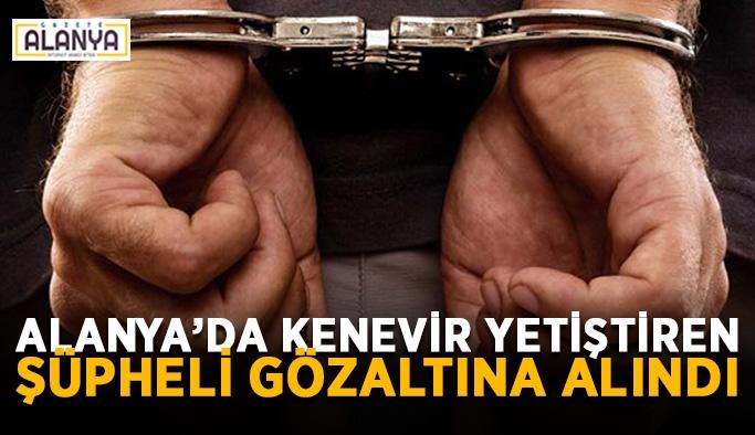 Alanya'da kenevir yetiştiren şüpheli gözaltına alındı