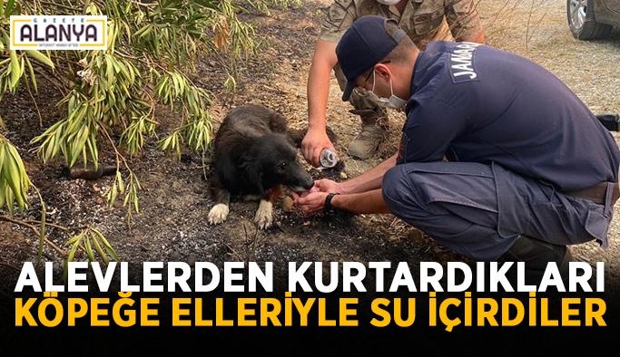 Alevlerden kurtardıkları köpeğe elleriyle su içirdiler