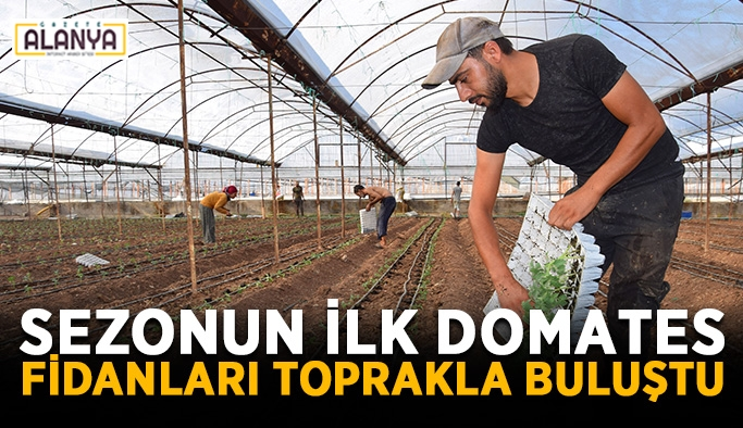 Sezonun ilk domates fidanları toprakla buluştu