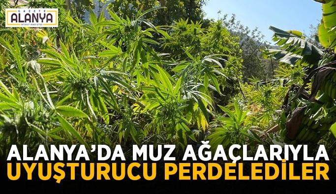 Alanya'da muz ağaçlarıyla uyuşturucu perdelediler