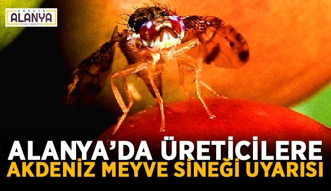 Alanya'da üreticilere Akdeniz meyve sineği uyarısı