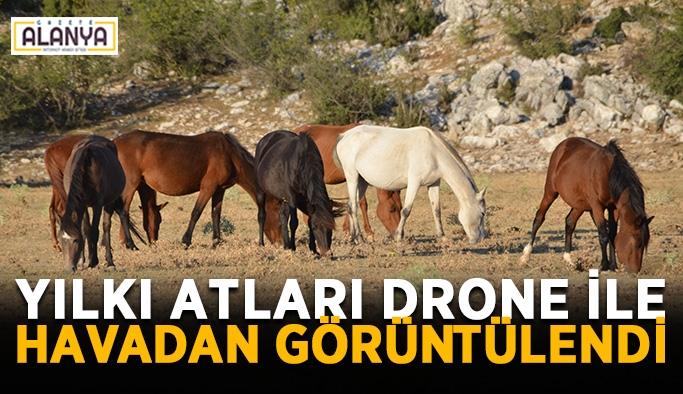 Yılkı atları drone ile havadan görüntülendi