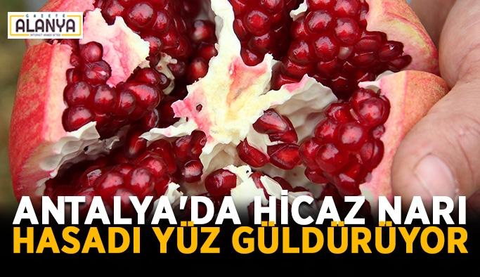 Antalya'da Hicaz narı hasadı yüz güldürüyor