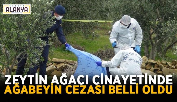 Zeytin ağacı cinayetinde ağabeyin cezası belli oldu