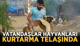 Manavgat'ta vatandaşlar hayvanları kurtarma telaşında
