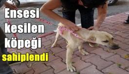 Ensesi kesilen köpeği sahiplendi
