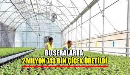 Bu seralarda  2 milyon 743 bin çiçek üretildi