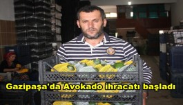 Gazipaşa'da Avokado ihracatı başladı