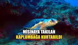 Misinaya takılan kaplumbağa kurtarıldı