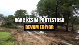 Ağaç kesim protestosu devam ediyor