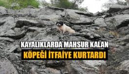 Kayalıklarda mahsur kalan köpeği itfaiye kurtardı
