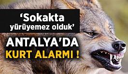 Antalya'da kurt alarmı !