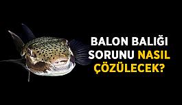 Balon balığı sorunu nasıl çözülecek?