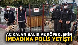 Aç kalan balık ve köpeklerin imdadına polis yetişti