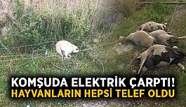 Komşuda elektrik çarptı! Hayvanların hepsi telef oldu