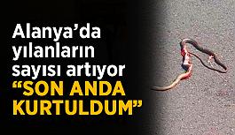 """Alanya'da yılanların sayısı artıyor: """"Son anda kurtuldum"""""""