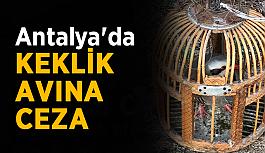 Antalya'da keklik avına ceza