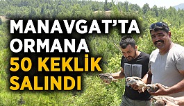 Manavgat'ta ormana 50 keklik salındı