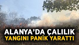 Alanya'da çalılık yangını panik yarattı