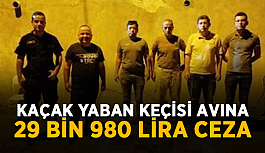 Kaçak yaban keçisi avına 29 bin 980 lira ceza