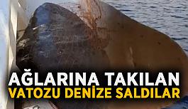 Balıkçılar ağlarına takılan vatozu denize saldılar