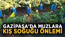 Gazipaşa'da muzlara poşetli önlem