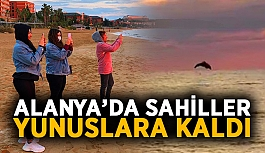Alanya'da turistsiz sahiller yunuslara kaldı