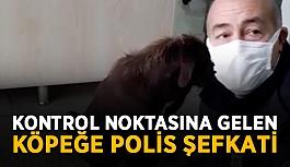 Kontrol noktasına gelen köpeğe polis şefkati