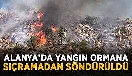 Alanya'da yangın ormana sıçramadan söndürüldü