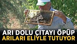 Arı dolu çıtayı öpüp arıları eliyle tutuyor