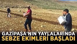 Gazipaşa'nın yaylalarında sebze ekimleri başladı