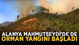 Alanya Mahmutseydi'de de orman yangını...