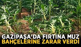 Gazipaşa'da fırtına muz bahçelerine zarar verdi